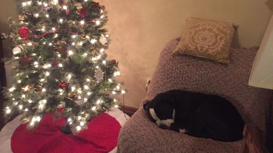 Dog sleeping near holiday tree
